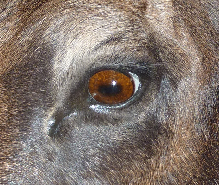 Here's Why Goats Have Those Freaky Eyes. : RedditDayOf